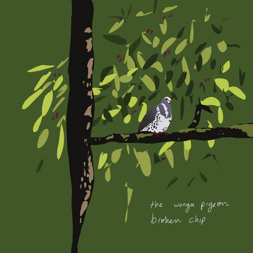 Broken Chip Wonga Pigeon